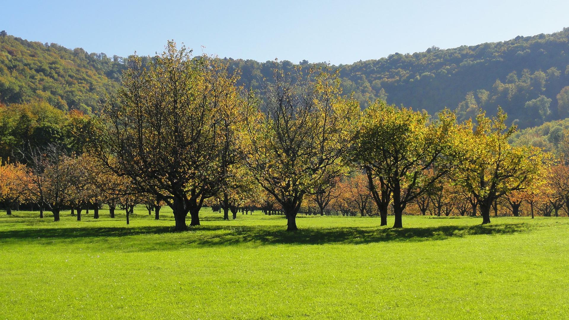 Streuobstwiese mit verschiedenen Obstbäumen. Foto: Hans
