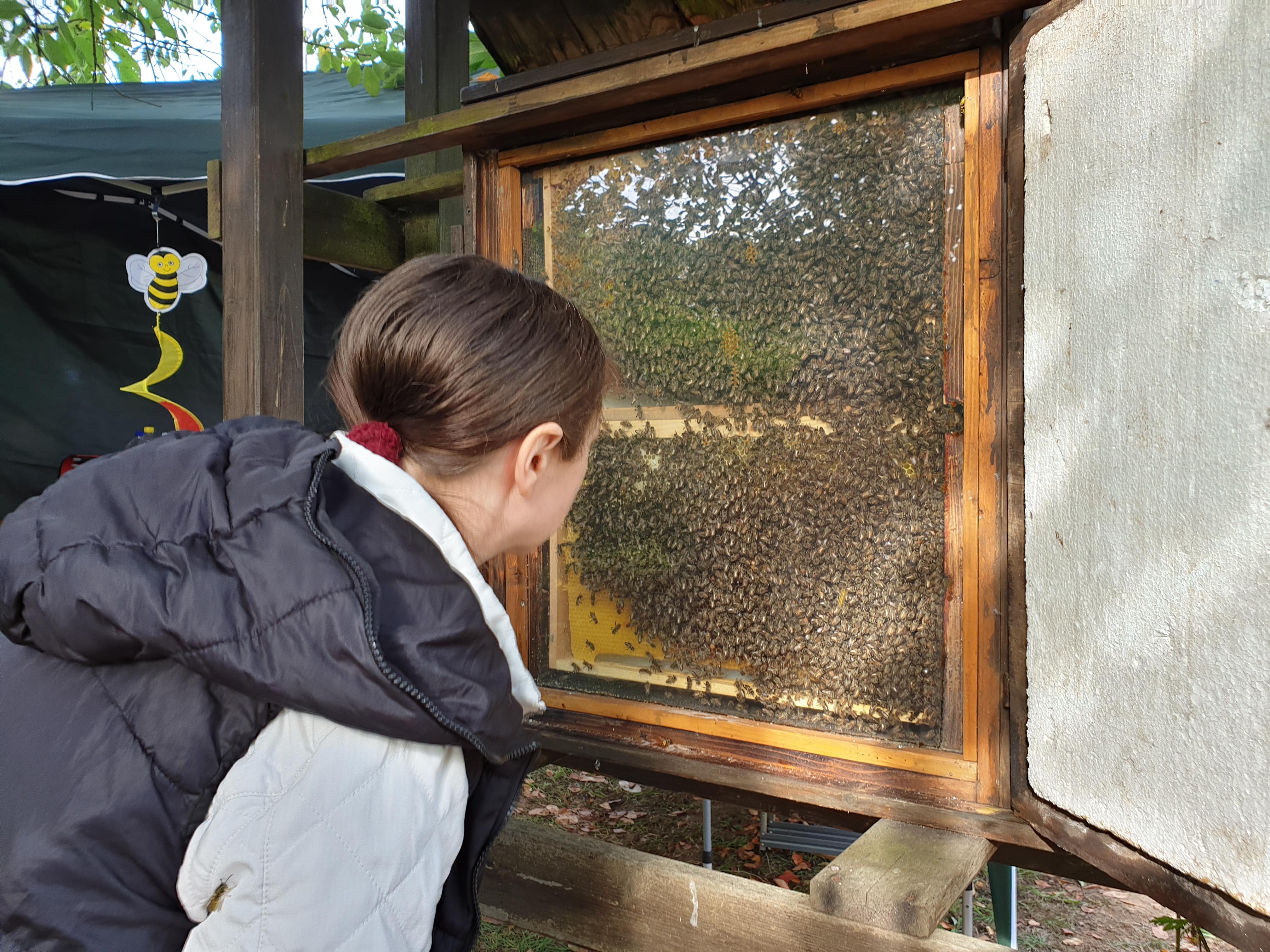 In der Natur-Schule Grund gibt es nicht nur Bienen zu sehen. | Foto: Sascha von Gerishem