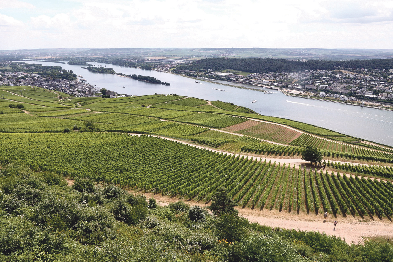 Weinanbau im Rheingau. | Foto: Arttours