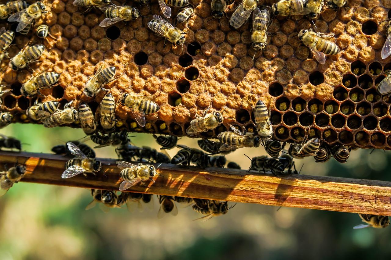 Fleißige Bienen. Symbolfoto.