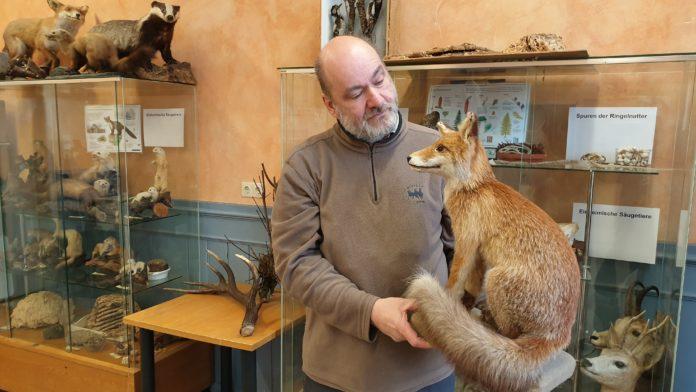 Diplom-Biologe Jörg Liesendahl mit Fuchs-Exponat in der Natur-Schule Grund. Foto: Sascha von Gerishem