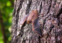 Nachts mit der Natur-Schule Grund Fledermäuse beobachten. Symbolfoto.