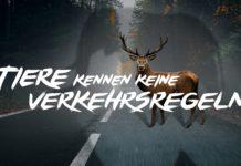 """Tiere kennen keine Verkehrsregeln. Kampagnenmotiv """"Elefant und Hirsch"""". Foto: obs/ACV Automobil-Club Verkehr"""