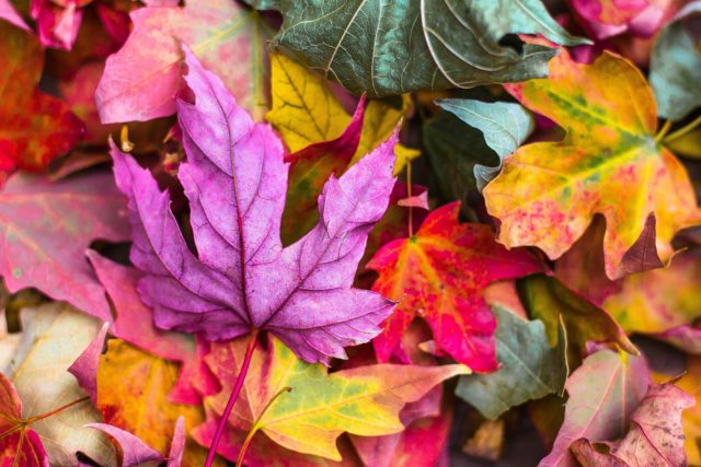 Der Herbst bringt bunte Farben mit sich. Symbolfoto.