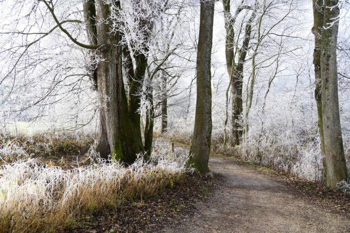 Wandern im Winterwald: Natur erleben mit der Natur-Schule Grund. Symbolfoto.
