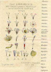 Methodus Plantarum Sexualis in sistemate naturae descripta (Leiden 1736) von Georg Dionysius Ehret