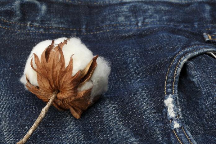 Bei Kaufland sind sämtliche Eigenmarkenartikel aus Baumwolle GOTS-zertifiziert. Foto: obs/Kaufland/Getty Images