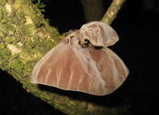 Besonderer Name und besonderes Aussehen: Das Judasohr ist ein Pilz. Foto: Natur-Schule Grund