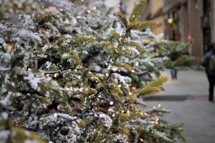 Die abgeschmückten Weihnachtsbäume gut sichtbar am Bürgersteig, nicht am Mülltonnenstandort, am jeweiligen Abholtag in Lennep, Lüttringhausen und Remscheid ablegen. Symbolfoto.