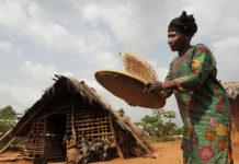 Kakaoproduzentin in der Elfenbeinküste bei der Arbeit. Foto: obs/TransFair e.V./Fairtrade | Eric St-Pierre