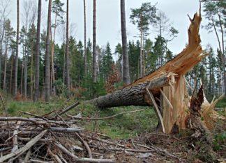 Bei Sturm- oder Orkanwarnung besteht erhöhte Gefahr. Symbolfoto: Henryk Niestrój