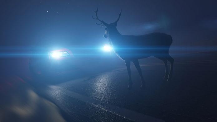 295.000 Wildunfälle passieren jährlich auf deutschen Straßen. Foto: obs/ACV Automobil-Club Verkehr/stock.adobe.com