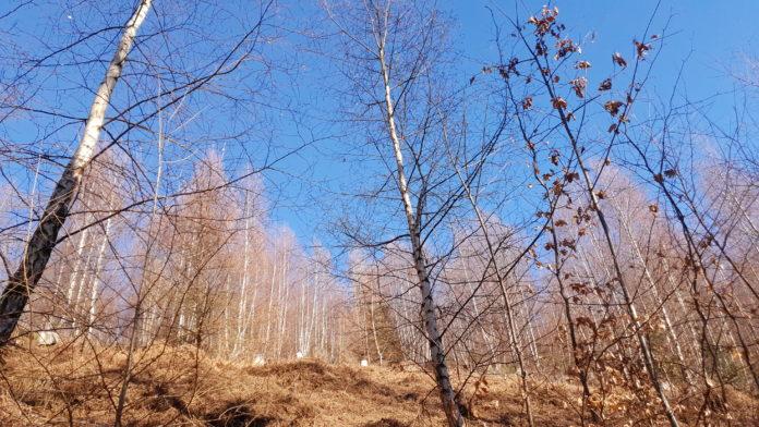 Der Remscheider Wald ist im Klimastress und braucht Hilfe. Foto: Sascha von Gerishem