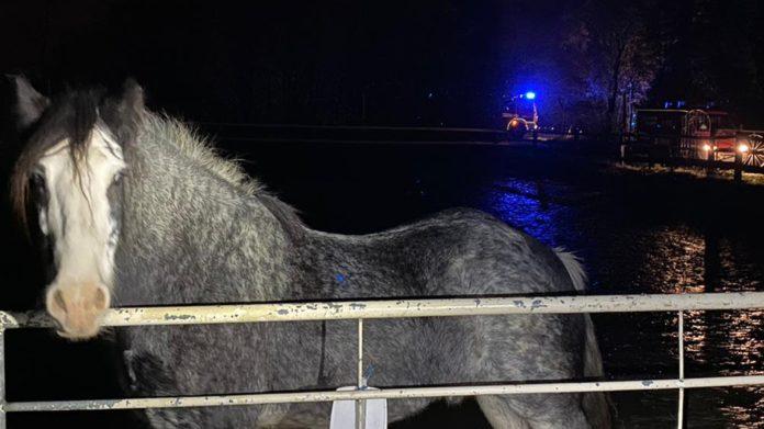 Die Feuerwehrleute konnten das Pferd problemlos auf das Gelände eines Reiterhofes führen. Foto: Feuerwehr Velbert