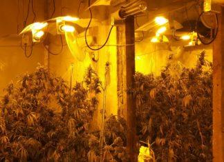Die Marihuana-Plantage in der Friedrich-Ebert-Straße in Wuppertal wurde professionell betrieben. Foto: Polizei Wuppertal