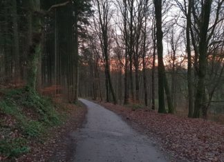 Auch auf den Waldwegen muss man aufmerksam bleiben. Foto: Sascha von Gerishem