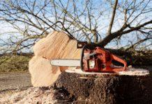 Ungeliebt und doch oft notwendig: Baumfällarbeiten. Symbolfoto.