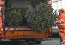 Oh Tannenbaum, oh Tannenbaum: Patrick Isaack (links) und Carsten Korthaus (rechts) haben mit ihren AWG-Kollegen in Wuppertal innerhalb von zwei Wochen jede Menge ausrangierter Weihnachtsbäume eingesammelt. Foto: AWG - awg.wuppertal.de