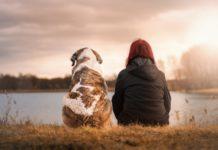 Hund: Der beste Freund des Menschen. Foto: Sven Lachmann