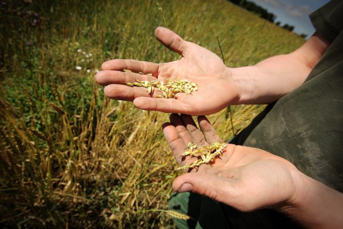 Die Flächen für ökologischen Anbau in der Landwirtschaft weiten sich immer weiter aus.