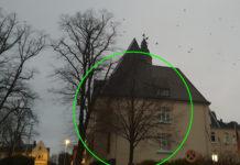 Diese Winterlinde hinter dem Rathaus Lüttringhausen wurde gerettet. Foto: Sascha von Gerishem