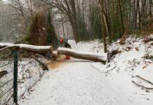 Wintereinbruch: Umgestürzter Baum. Bild: Löschzug Elfringhausen