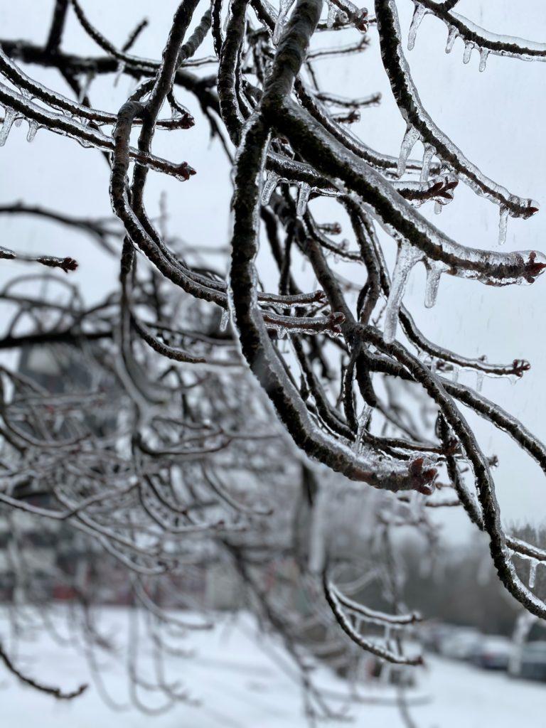 Eisbildung am Baumbestand. Foto: Feuerwehr Remscheid