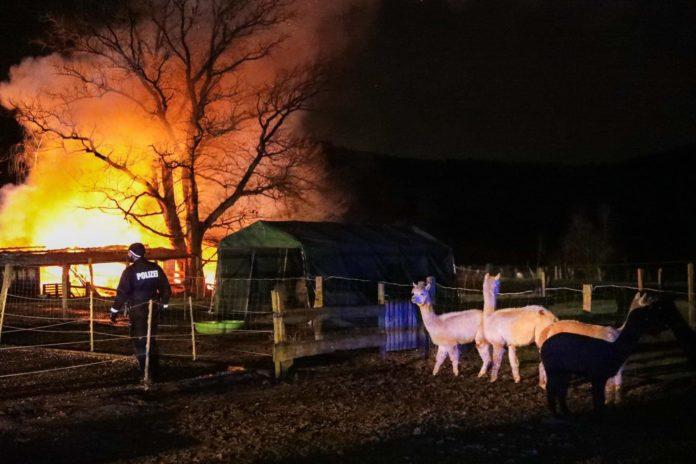 Beim Brand auf der Alpakafarm in Solingen sind die Stallungen niedergebrannt, Tiere kamen nicht zu schaden. Foto: Tim Oelbermann - www.oelbermann-foto.de