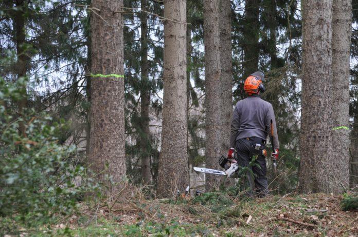 Forstarbeiten stehen an. Symbolbild.