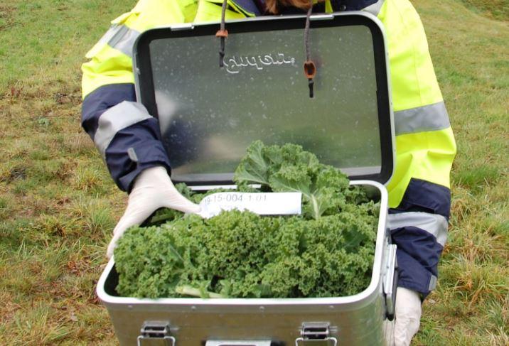 """Nach der """"Ernte"""" wurden die Pflanzen von den Experten des LANUV auf PCB untersucht. Foto: UvK/Ennepe-Ruhr-Kreis"""