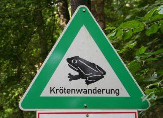 Achtung Krötenwanderung!