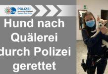 Vorerst kam der gerettete Hundwelpe bei einer Polizeibeamtin unter, über den weiteren Verbleib werden die Ordnungsbehörden entscheiden. Bild: Polizei