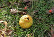 Mit der Natur-Schule Grund kann man in Remscheid mehr als nur Pilze entdecken. Foto: Sascha von Gerishem