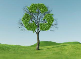 Papierrecycling rettet nicht nur Bäume. Foto: RoadLight